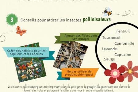 Infographie_potager biologique